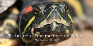 Turbo, la tortue de floride-le douzième membre Semalt
